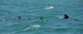 Dolphin Pos Id 1