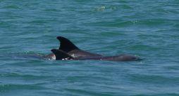 Dolphin Pos Id