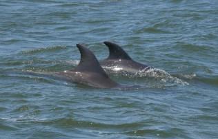 Kenneth Dolphin ID