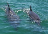 Two dolphins Blow holw