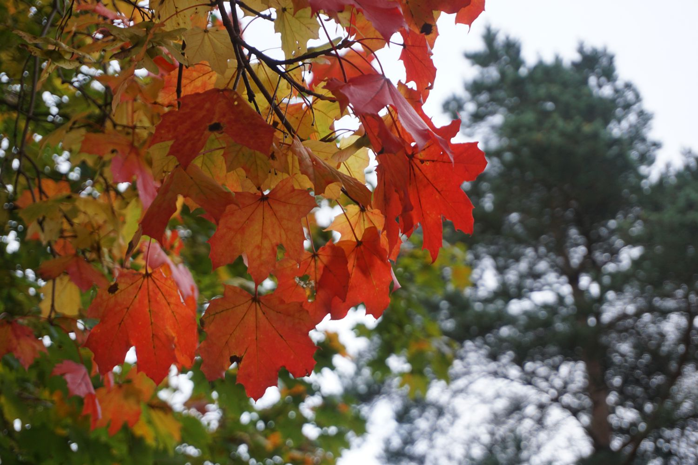 Kenapa Daun Berubah Warna Dan Berguguran Pada Musim Gugur?