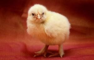 grippe aviaire dordogne