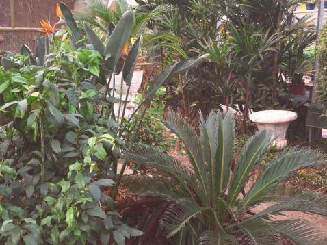 au jardin 4