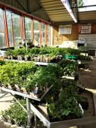 gv plants