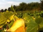 Horizon d'automne