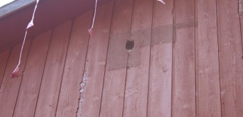 Pileated woodpeckers' handiwork on the Piltingsrud's house.