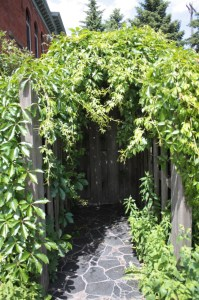 The entrance to a garden on the east side of the old fire station. Ceci and Colin told me they've enjoyed gardening together.