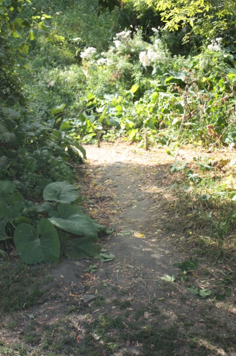 One of several trails through the brush and woods of Selby Hill.)