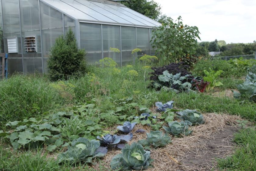 The Cherokee Heights and Youth Farm Garden and greenhouse are on the Baker Center property.