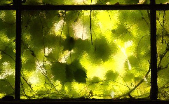 leaf covered window
