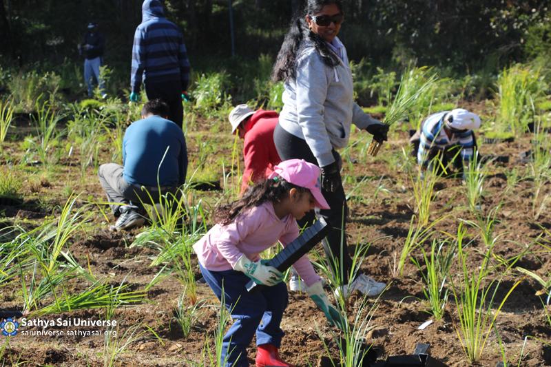 Australia - New South Wales - Tree Planting 01 copy