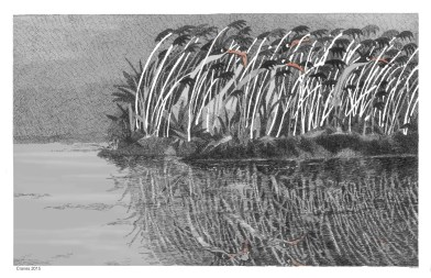 Cranes and Reeds