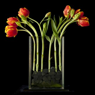 braiden_blossoms-Flowers_flat vase_2013