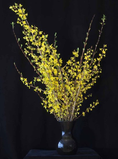 braiden_blossoms-Yellow Flower_2_2012