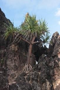 Un arbre un peu perché