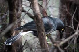 Gros oiseau