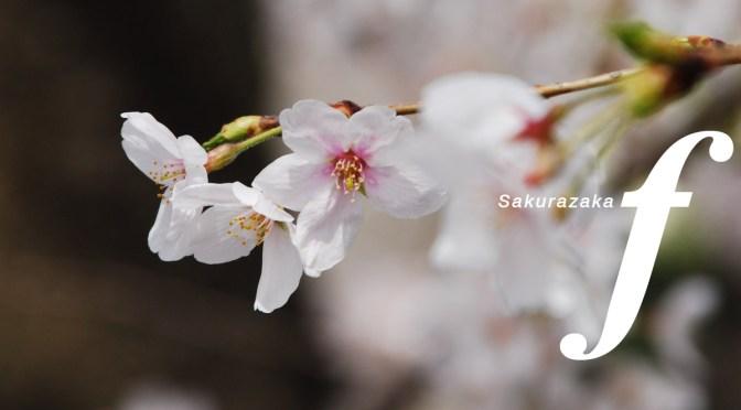 名曲の桜坂