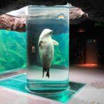 坂東元( 旭山動物園長)経歴年間300万人来園者獲得上野動物園を超えた手腕とは!