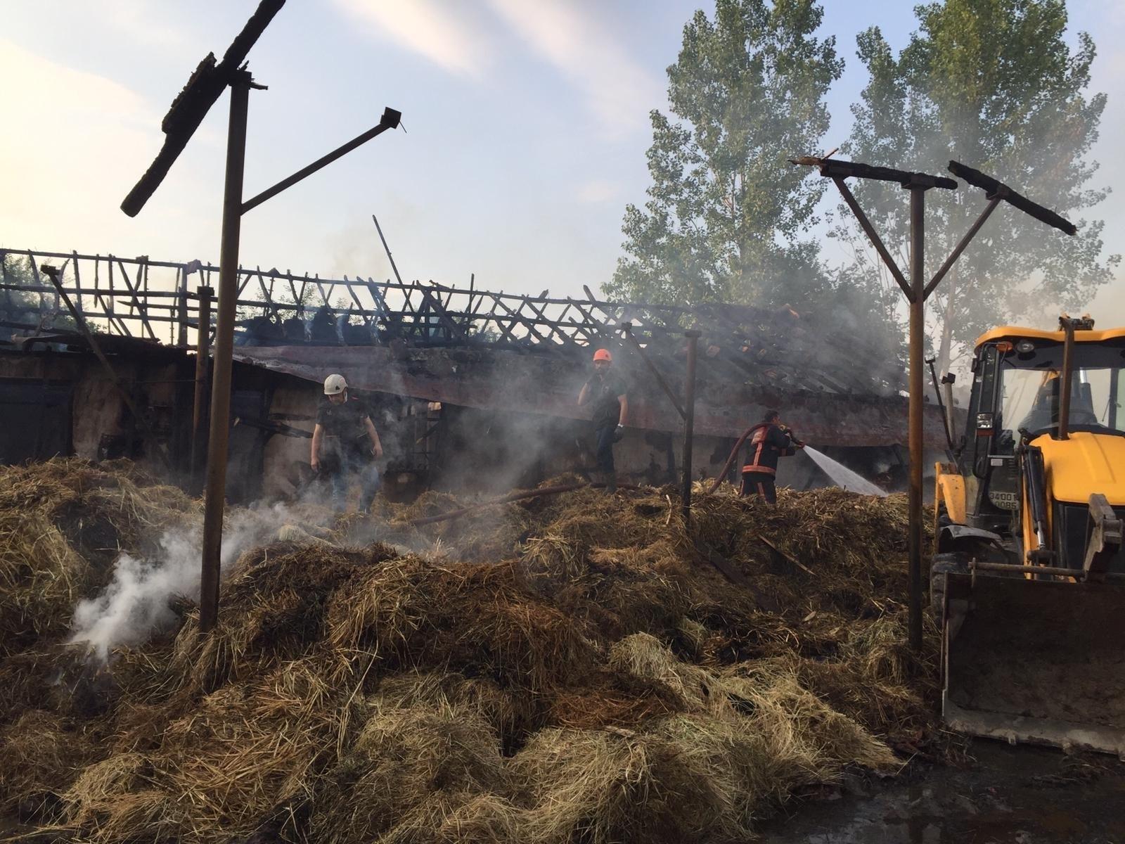 Sakarya'da çiftlikte yangın: 4 büyükbaş hayvan telef oldu, yüzlerce saman yandı