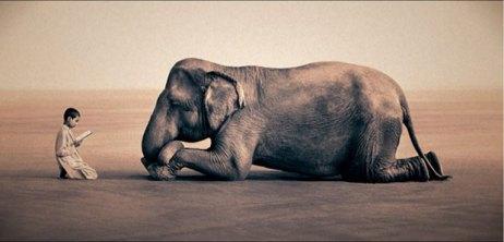 fil ve insan