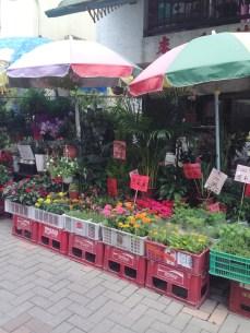 Plants for sale in Mui Wo.