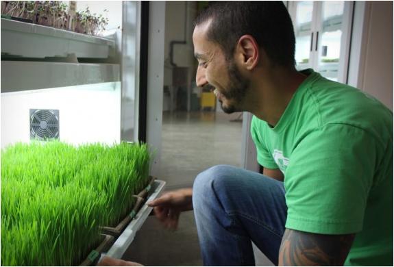 urban-cultivator-5