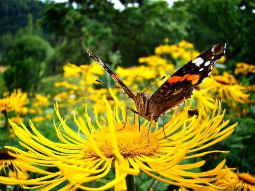 butterfly-1282344_960_720