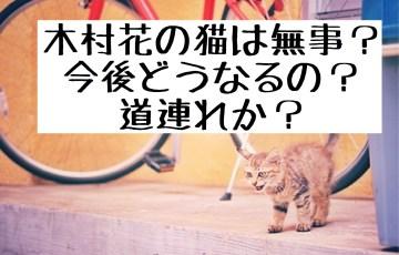 木村花の猫は無事?どうなるの?道連れ?