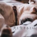 犬と生きるということ