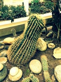 Even more menacing cacti.