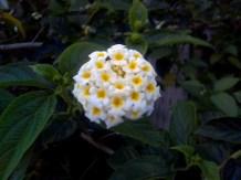 flower05