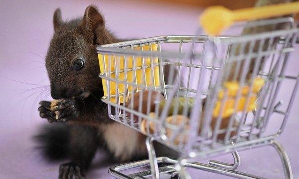 Squirrel Nager Shopping Cart Funny  - Alexas_Fotos / Pixabay