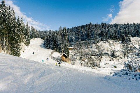 Mountains Trees Ski People Crowd  - Aiky82 / Pixabay
