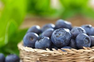 img_blueberry_01