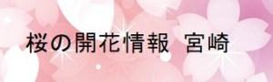 桜の開花情報 宮崎