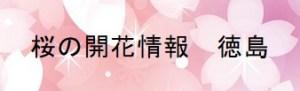 桜の開花情報 徳島
