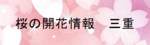 桜の開花情報 三重