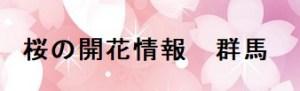 桜の開花情報群馬