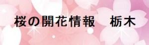 桜の開花情報栃木