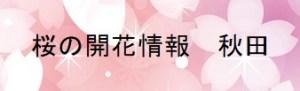 桜の開花情報秋田