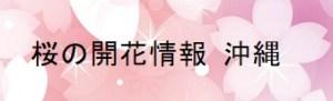 桜の開花情報 沖縄