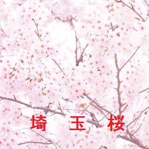 埼玉の桜情報