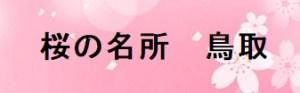 鳥取の桜の名所