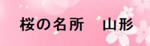 桜の名所山形