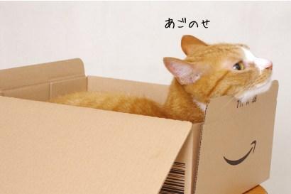 我が家の雑種猫な〜にゃ♥