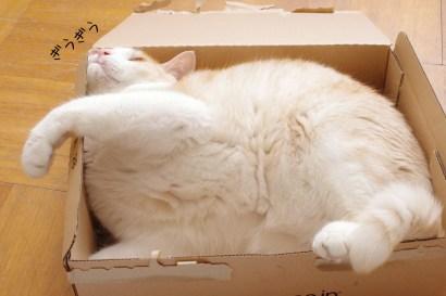 我が家の雑種猫マッコイ
