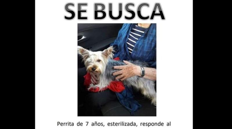 #RuidoEnLaRed Secuestro y extorsión por ciertas mascotas, cada vez más común en Morelia