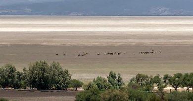 #RuidoEnLaRed El agonizante Lago de Cuitzeo