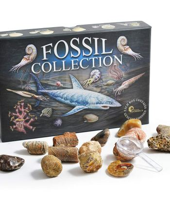 Fossil Collection Kit