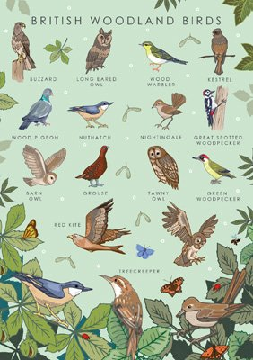 British Woodland Birds Card